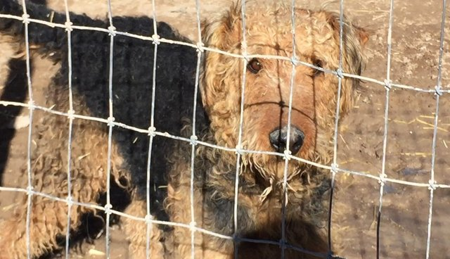Undercover Investigation Exposes Suffering at Unlicensed Puppy Mill