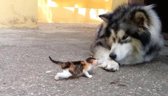 Big Dog Has The Best Reaction To Meeting Tiny Orphaned Kitten