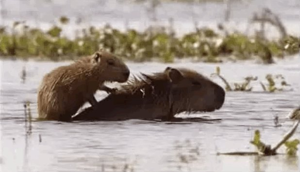 These 11 Amazing Capybaras Will Make You Want to Go ...