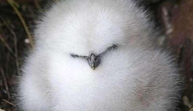 Cute Baby Birds