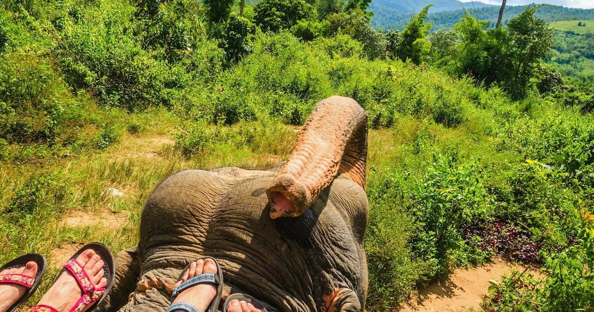 If You Love Elephants, Don't Ever Ride Them. Here's Why.