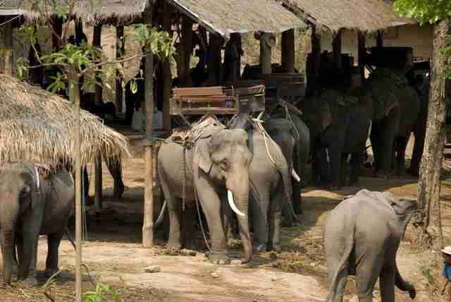 If You Love Elephants Dont Ever Ride Them Heres Why  The Dodo Share On Facebook
