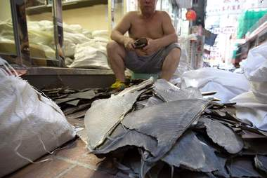 Shark fins removed from their shipping sacks in a warehouse in Hong Kong