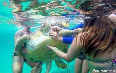 friends rescue sea turtle