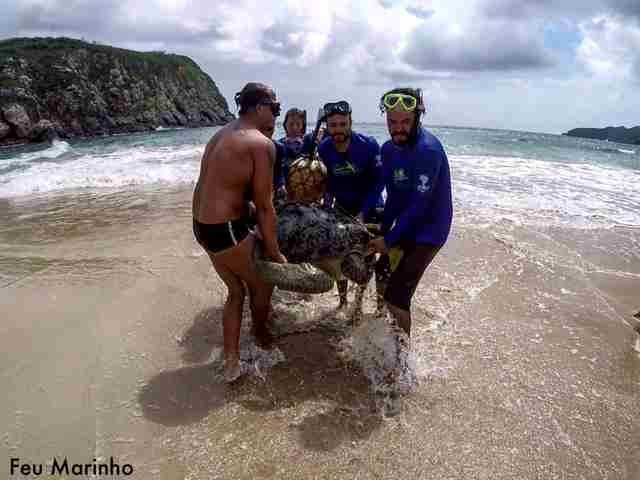 friends rescue sea turtle