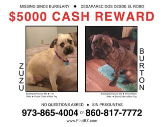 Flyer for Zuzu and Burton, missing dogs