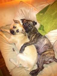Zuzu and Burton, dogs stolen in burglary