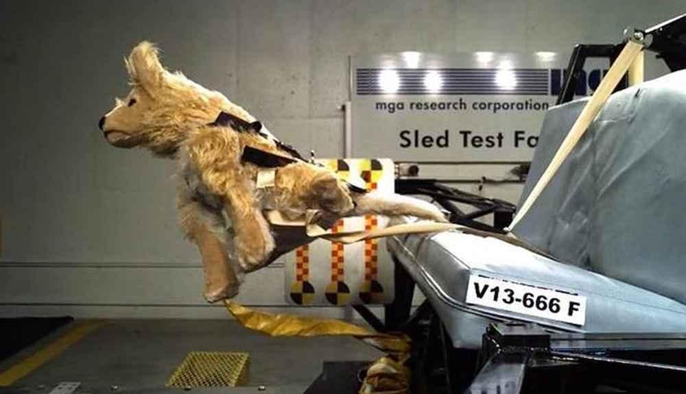 Crash Test Videos Show Pet Carriers Aren T Always Safe The Dodo