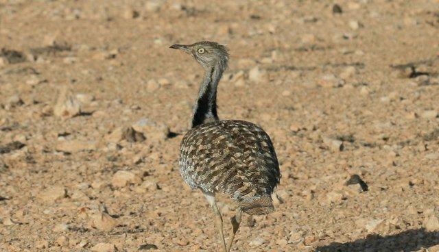 10 Recently Extinct Reptiles - ThoughtCo