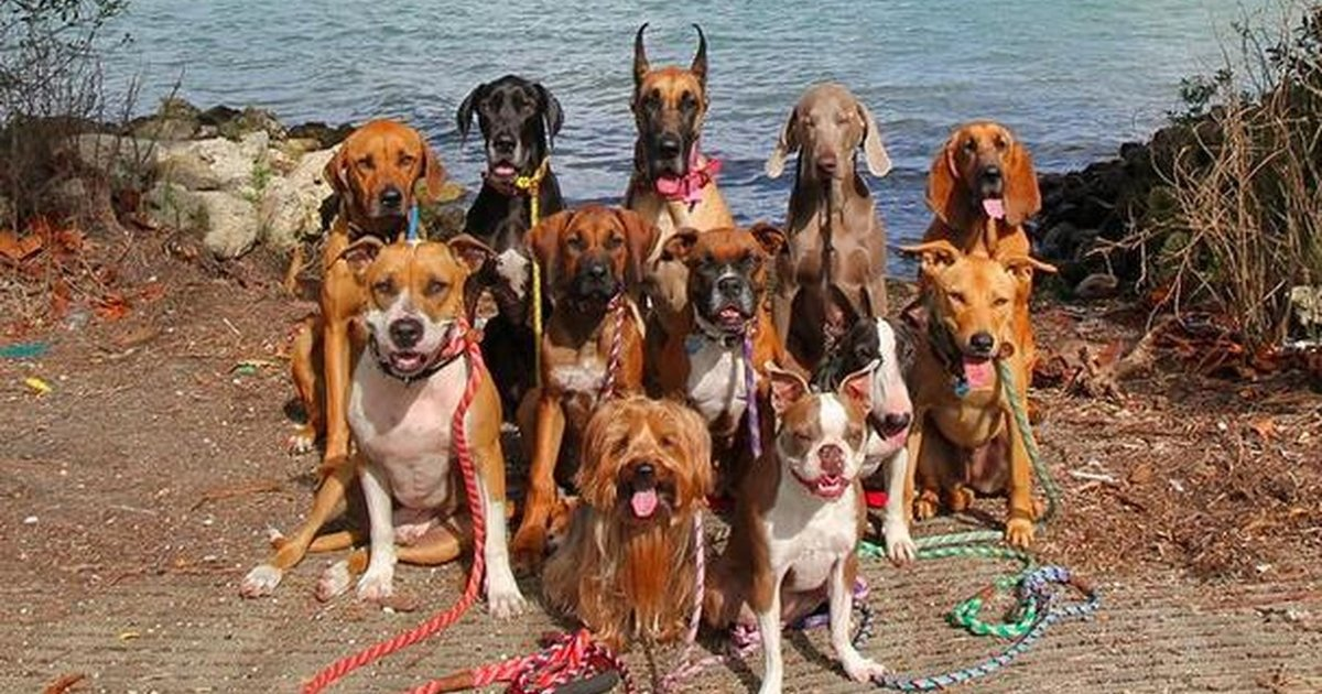 Glorious Group Photos Show The Happiest Pack Of Dogs In ...