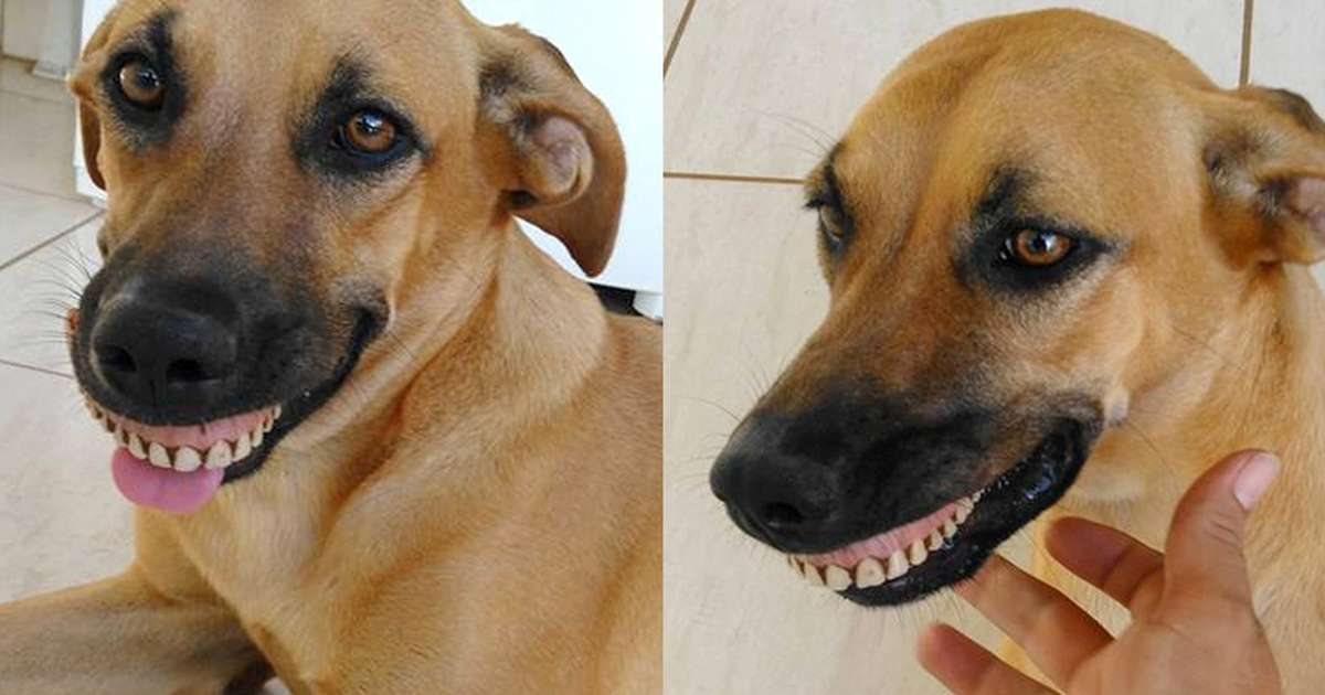 man is shocked when his dog walks in with a weird new smile the dodo