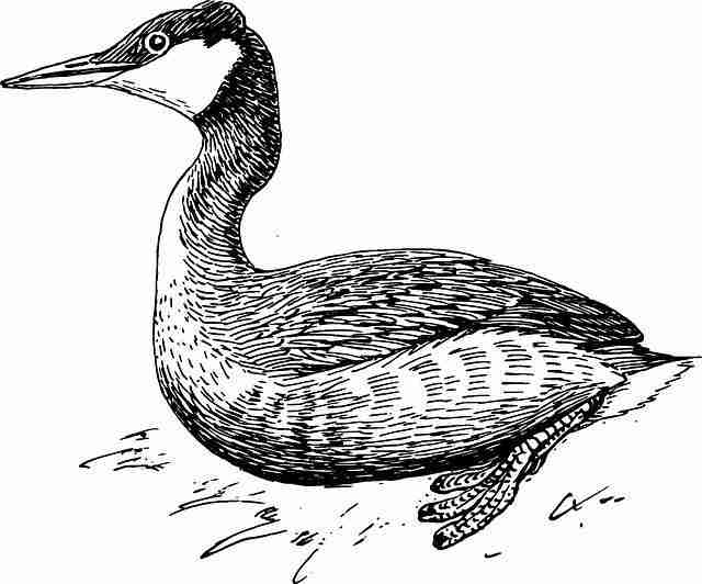 Image of: Step 2010 Alaotra Grebe The Dodo Here Are Animals We Drove To Extinction In The Last Years The Dodo