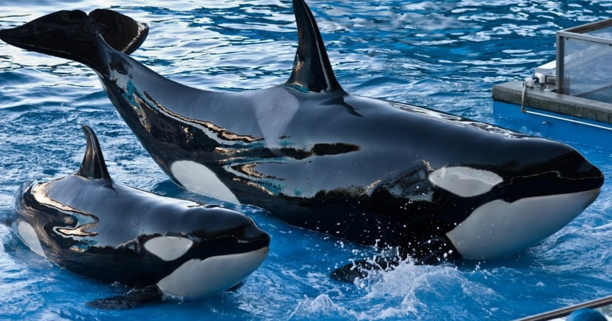 whales life on entertainment parks essay