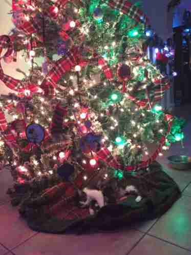 Pregnant Cat Has Her Kittens Right Under Family\'s Christmas Tree ...