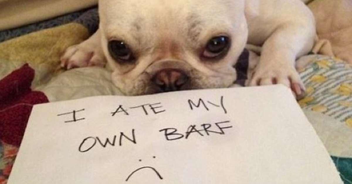 Dogs Puke In Private For A Reason The Dodo