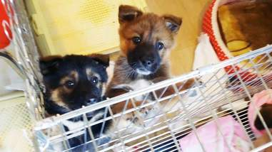 Jiho and Jino, two puppies rescued from a dog tonic shop in South Korea