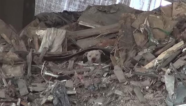 Terrified Dog Found Hiding In Trash Heap Gets The Happiest Makeover