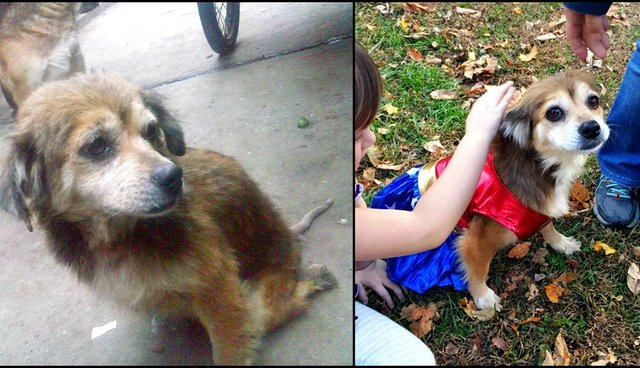 How We Gave A Paralyzed Stray Dog A Loving Home