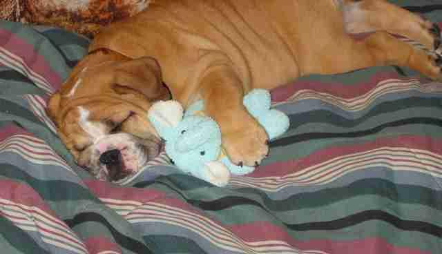 Why Do Dogs Bark When They Sleep
