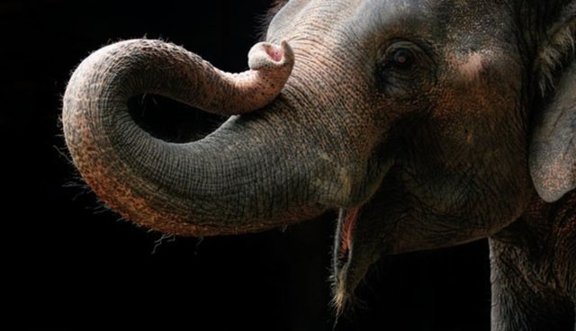 The Thesis Statement Of An Essay Must Be  Awesome Things An Elephant Does With Her Trunk And Playing Monopoly  Isnt One Of Them  The Dodo English Literature Essay Questions also Good Persuasive Essay Topics For High School  Awesome Things An Elephant Does With Her Trunk And Playing  Essay About Health
