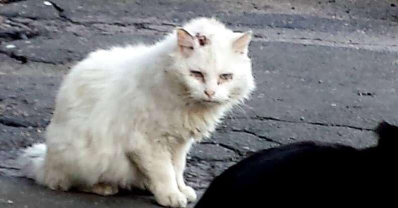 Stray cat in Boston