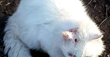 Injured stray cat in Boston