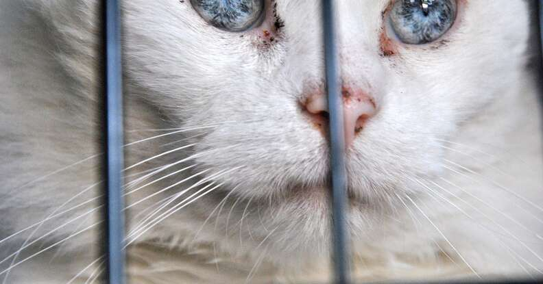 Stray cat in cage