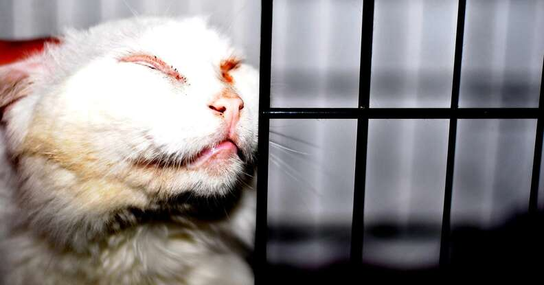 Stray cat captured on Boston streets
