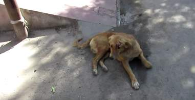 dog hit by a car and rescued