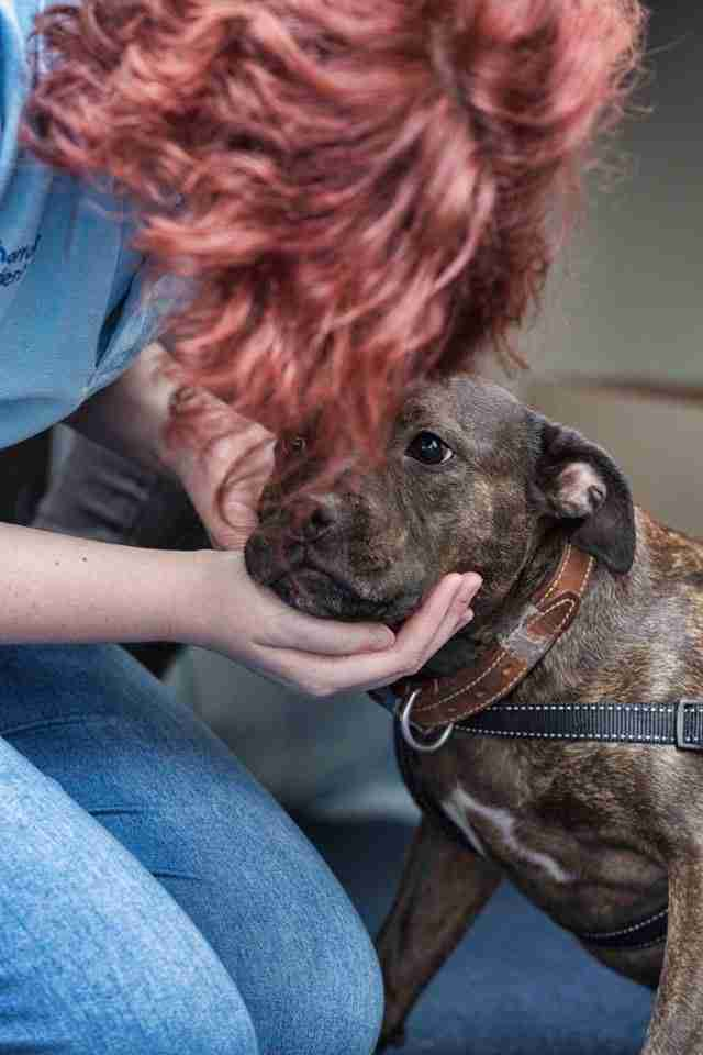 Vet Gives Out Free Care So Homeless People Can Keep Their Pets The Dodo