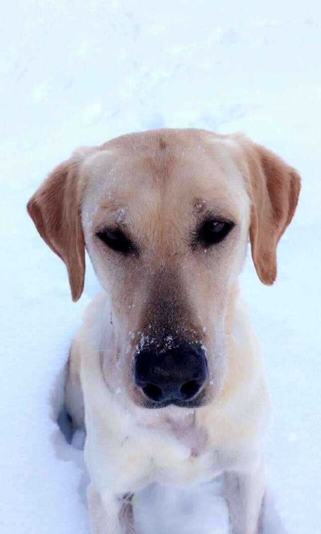 Idaho dog, Casey, killed by USDA M44 cyanide device