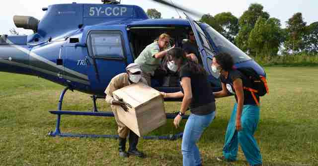 Orphaned baboon being transported to rehabilitation center