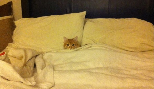 12 Pets Who Aren't Sorry They Stole Your Bed