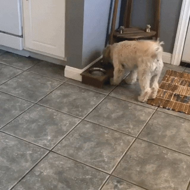 Why Do Dogs Walk Away From Their Bowl To Eat