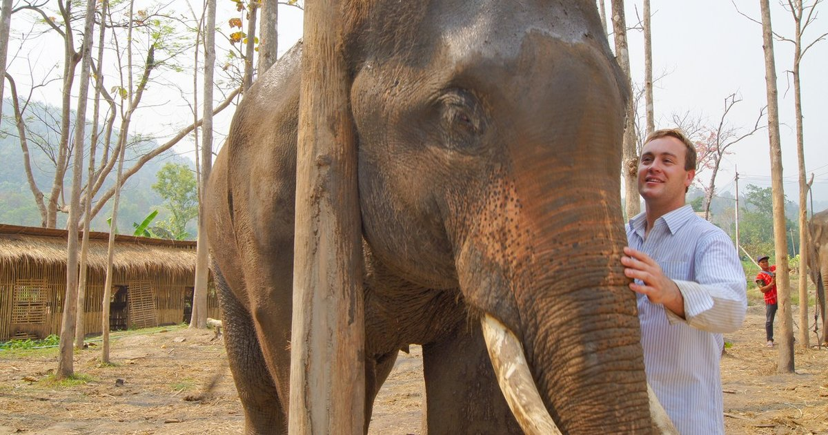 Elephants And Humans Share A Unique Biological Connection