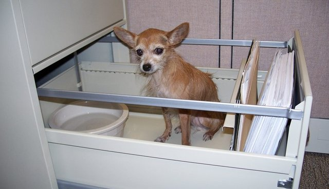 Tragic Life Is For Puppy Mill Dogs