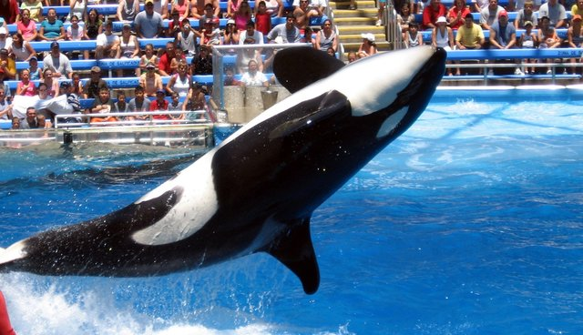 SeaWorld Responds To Twitter Disaster With A Series Of Bizarre Tweets