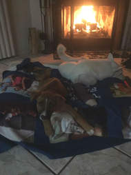 disabled dogs elsa rose, starfish and danali warming by a fireplace