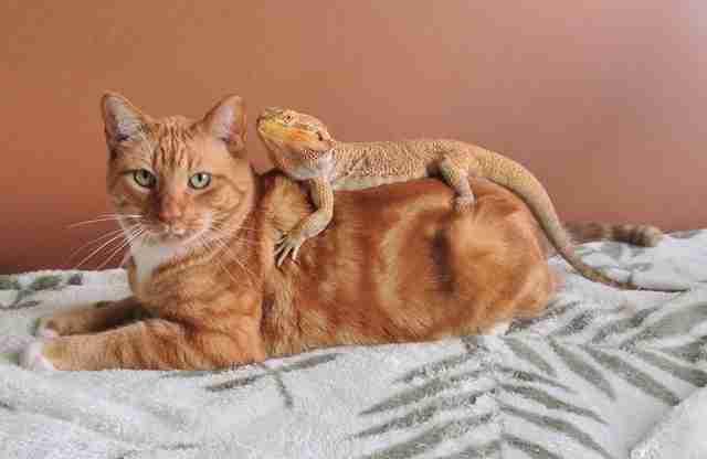 cheshire cat socks