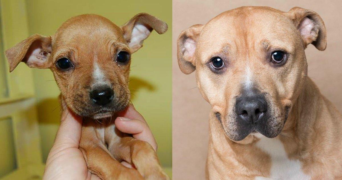 Mash Dog Adoption