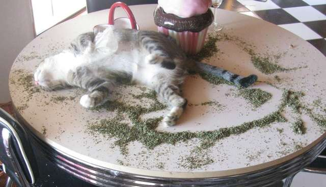 13 Cats Who Don\u0027t Have A Catnip Problem (So Just Chill Out