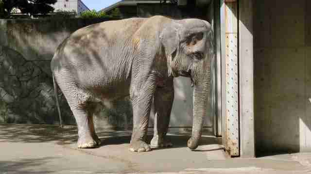 World's Saddest Elephant Dies After 60 Years Alone In Her Cell
