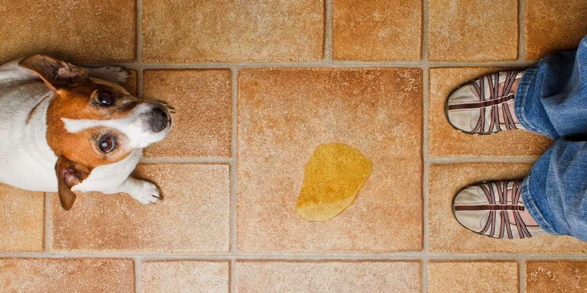 cat micturition surface floor