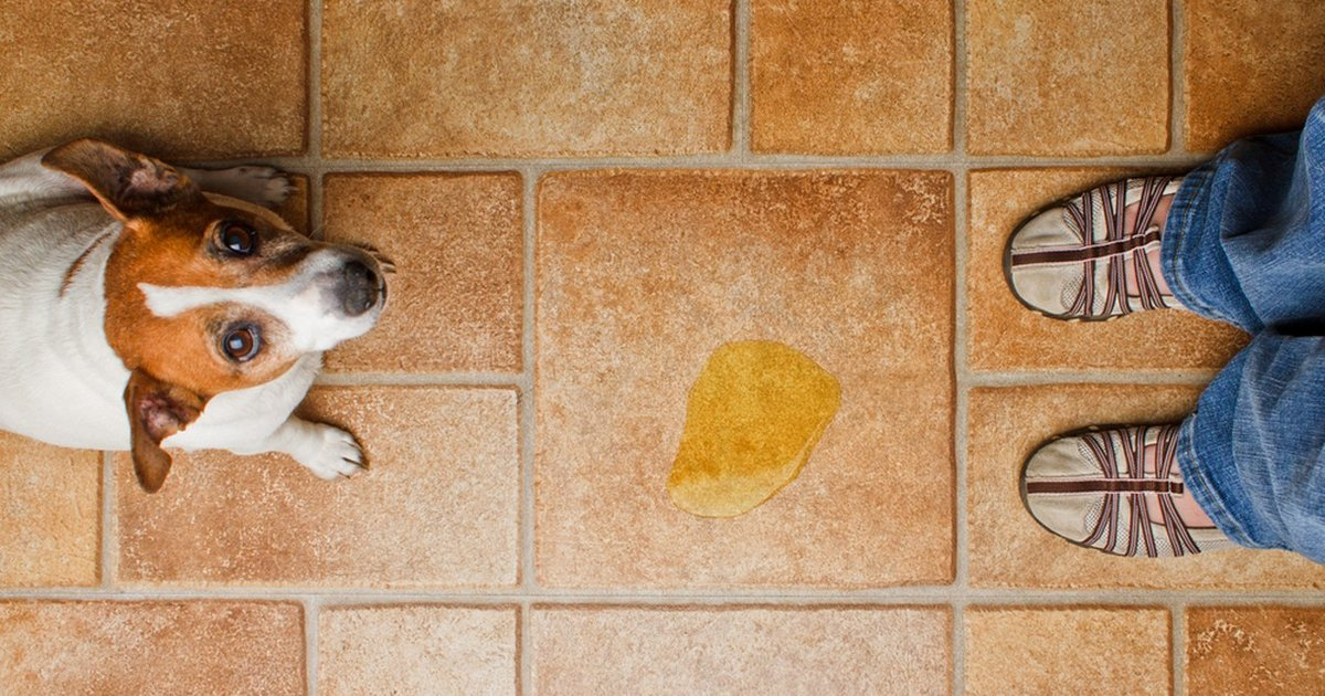 Rid Your House Of Pet Pee