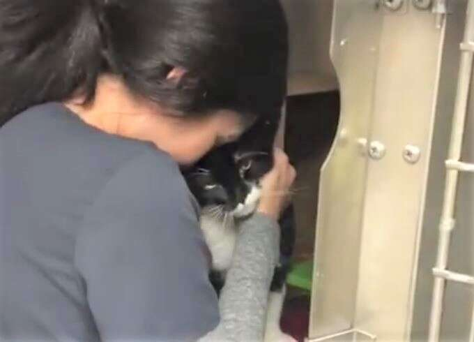 declawed cat hugging woman at shelter