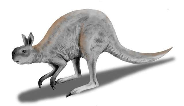 Giant One Toed Rabbit Faced Sloth Like Roos Once Roamed