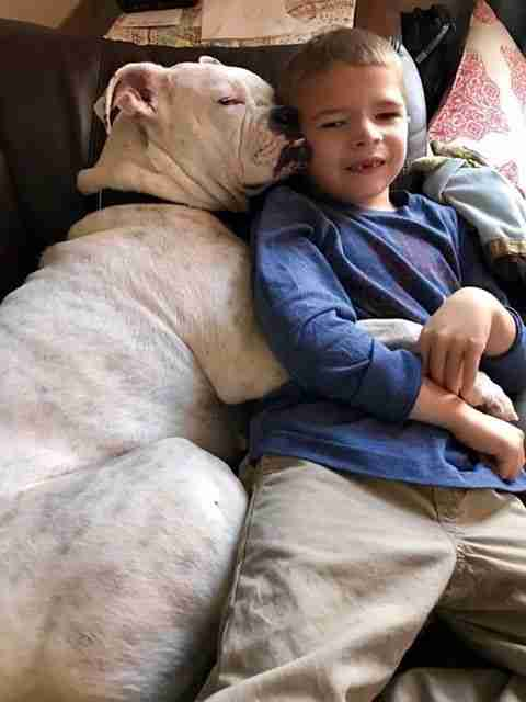 Deaf Dog Makes Friends With A Boy Who Totally Gets Her