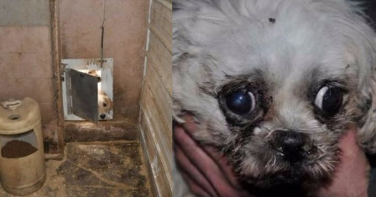 Massive Puppy Mills Get Permission To Breed Even More Dogs - The Dodo