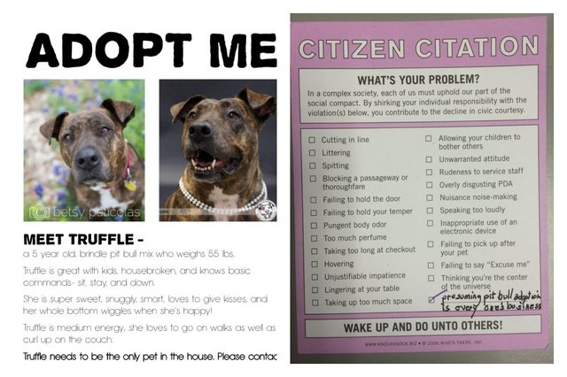 Dog Adoption Flyer Gets A Citizen Citation The Dodo