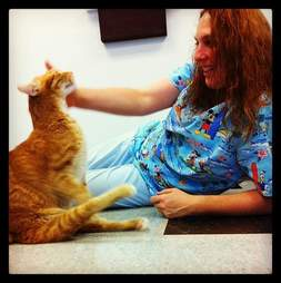 Paralyzed cat getting attention at vet clinic